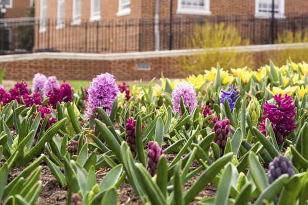 Spring Flowers Growing Along a City Street